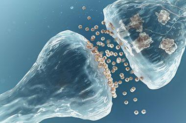 Układ endokannabinoidowy a konopie