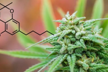Kannabichomen CBC – potencjał medyczny kannabinoidu