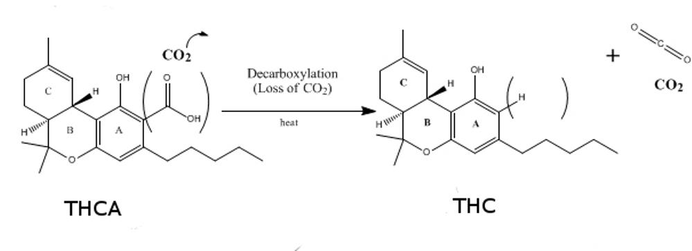 THCA THC różnice