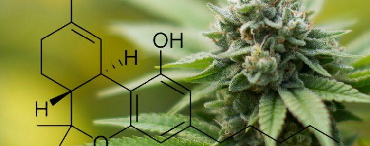jak powstaje THC
