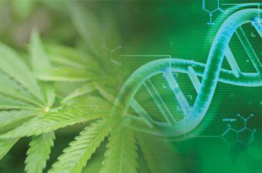 Jak CBD wpływa na nasze geny? [WYNIKI BADAŃ]