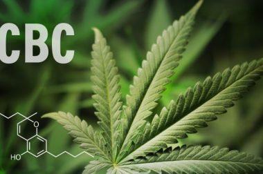 Właściwości zdrowotne kannabichromenu CBC