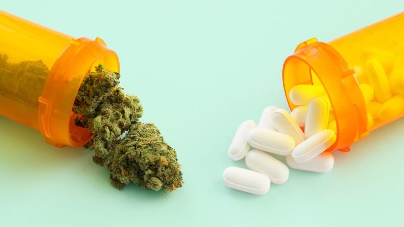 kannabinoidy w leczeniu bólu