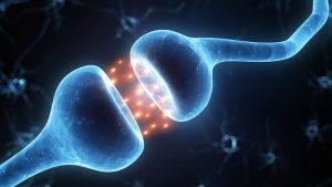 Receptor GPR55