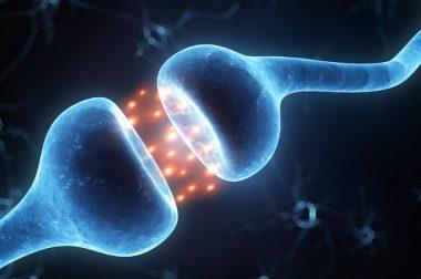 Receptory CB1 i CB2 i ich rola w działaniu kannabinoidów