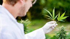 niedobór endokannabinoidów