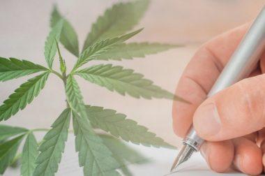 100 tys. podpisów szansą na legalizację marihuany w Polsce