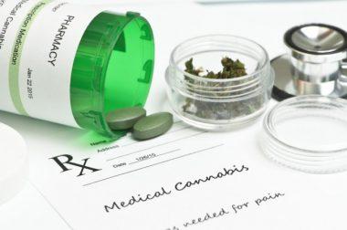 Nowy producent, nowe odmiany. Medyczna marihuana jest ponownie w aptekach!