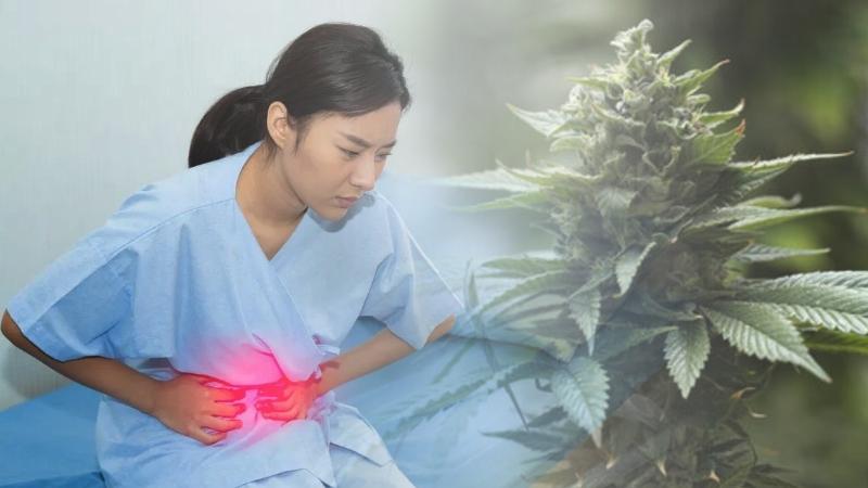 CBD trawienie biegunka jelita