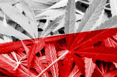 Już dziś kolejne spotkanie Parlamentarnego Zespołu ds. Legalizacji Marihuany
