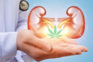 Przeciwnowotworowe właściwości kannabinoidów dają nadzieję pacjentom chorym na raka nerek