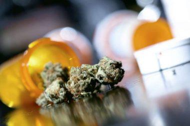 Nowa odmiana medycznej marihuany od Spectrum Therapeutics: 10% THC i 7% CBD