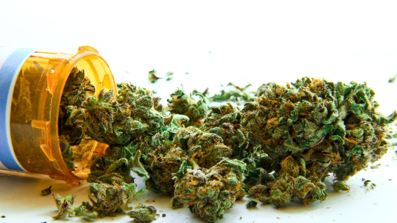 odmiana medycznej marihuany