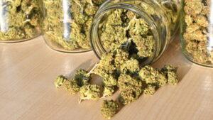 mikrodawkowanie THC