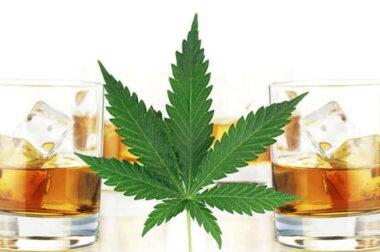 Czy CBD można łączyć z alkoholem?