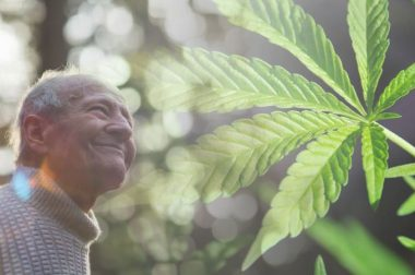 THC i CBD – starzenie się z godnością?