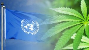 ONZ marihuana