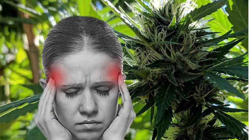 CBD pacjenci migrena