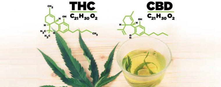 CBD THC różnice