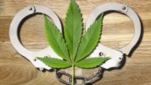 uprawiał marihuanę sprawę umorzono