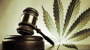 uprawa marihuany umorzona sprawa