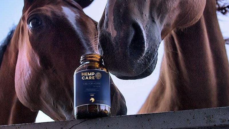 olejek CBD dla psa kota i konia
