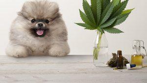 olejek CBD dla psa