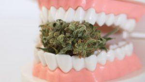 konopna pasta do zębów