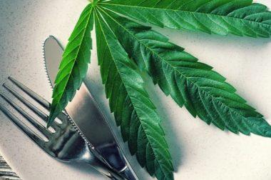 CBD i THC mogą pobudzać apetyt [PRZYKŁADOWE DAWKOWANIE]