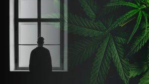 CBD THC depresja dawkowanie