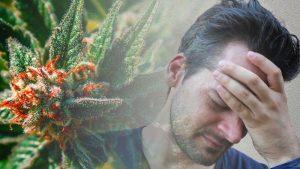 CBD THC migreny