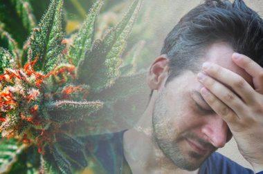CBD i THC na migreny [PRZYKŁADOWE DAWKOWANIE]