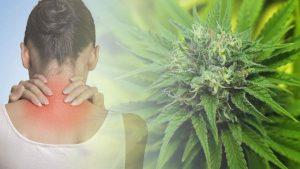 dawkowanie THC na ból