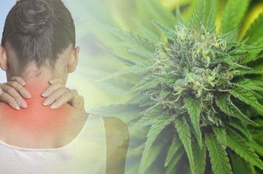 Dawkowanie THC i CBD na ból neuropatyczny