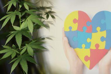Spektrum autyzmu: medyczna marihuana łagodzi objawy u dzieci