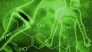 mutacje układu endokannabinoidowego