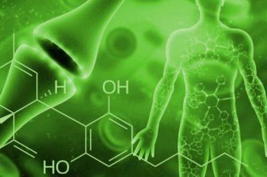 Mutacje układu endokannabinoidowego jedną z przyczyn lęku?