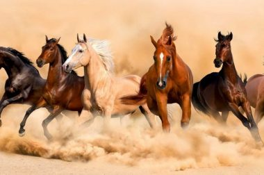 Konie były leczone marihuaną już w starożytności