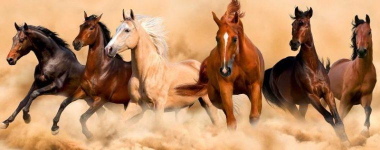 konie leczone marihuaną