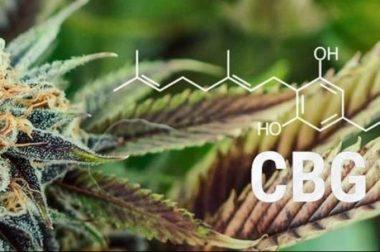 Jaki jest wpływ CBG na ludzki organizm?