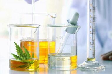 Czy olejki CBD można przedawkować?