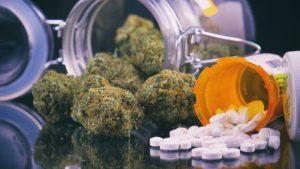 marihuana i operacja