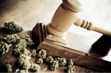 Wyrok byłego policjanta za marihuanę do celów leczniczych