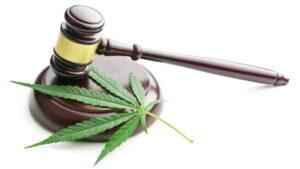 policjant wydalony ze służby za marihuanę