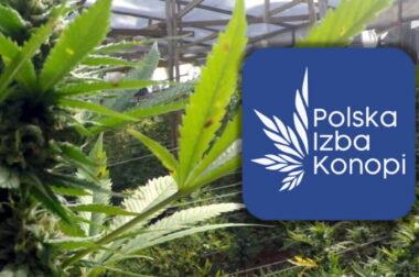 Polska Izba Konopi – dla potrzeb branży konopnej